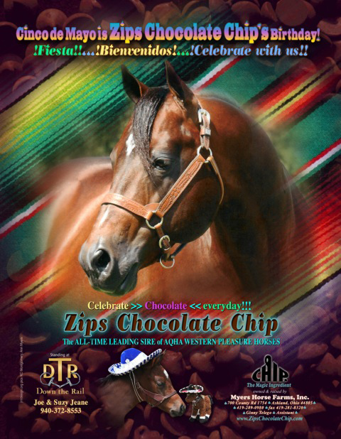 Zips Chocolate Chip Horses For Sale